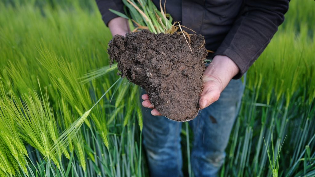 Eine ganzheitliche regenerative Landwirtschaft ist die Lösung - nicht nur für den Klimawandel