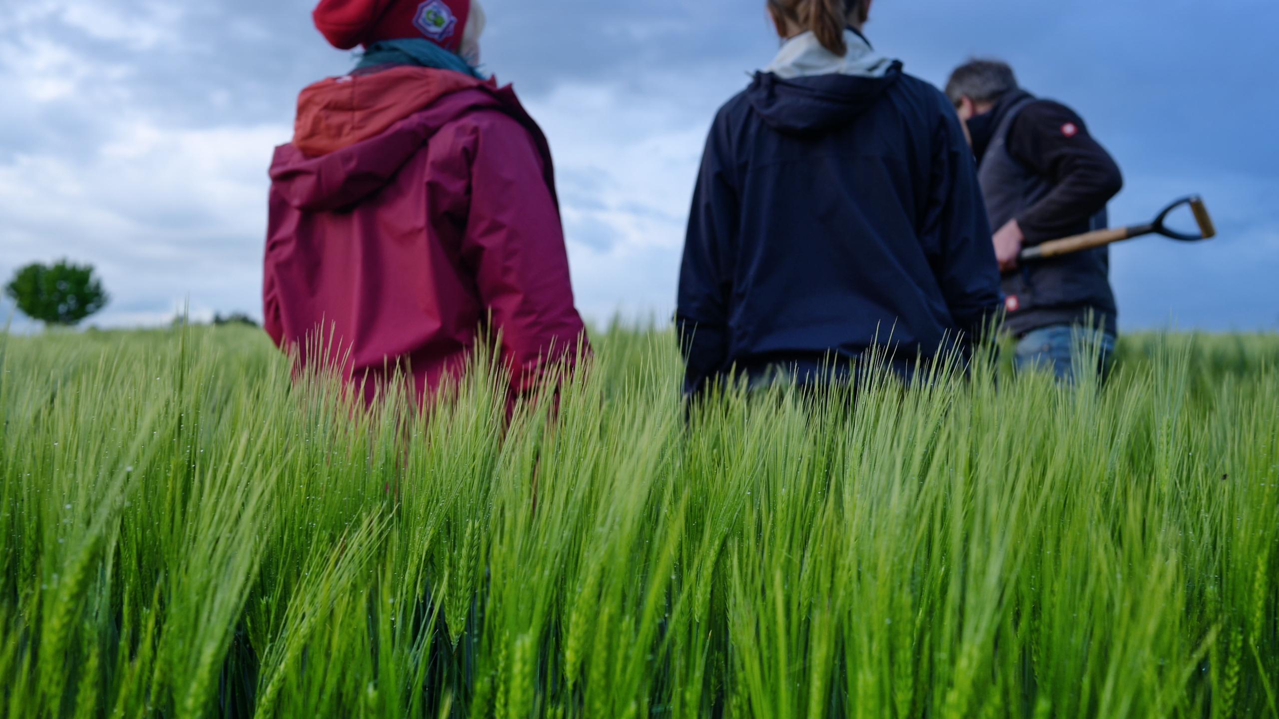Feldführung mit Alexander Klümper - Aukse TV - Regenerative Landwirtschaft