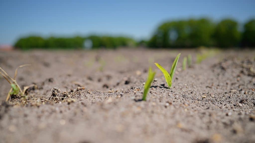 Warum es sein kann, dass die Bundesregierung bei einem kompletten Verbot des Pestizids Glyphosat im Umweltschutz nicht den richtigen Weg geht.